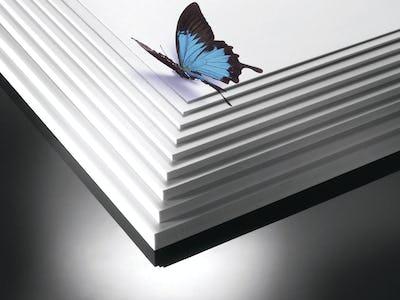 Butterfly 13904